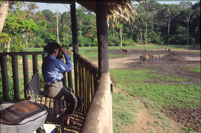 An image of C;arissa Augustinus seated in the viewing platform, and looking with binoculars at the many forest elephant gathered in the wide forest clearing below.