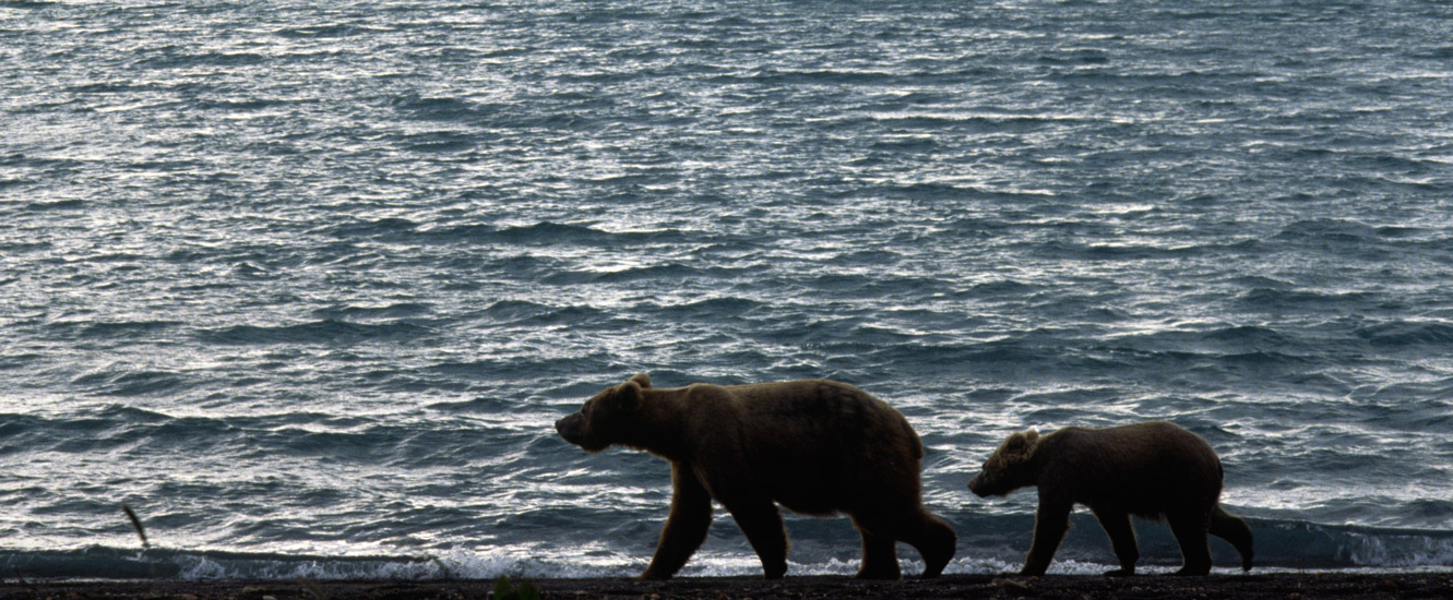 An image of a bear and half-grown cub walking along a rocky shoreline with the lake in the background.