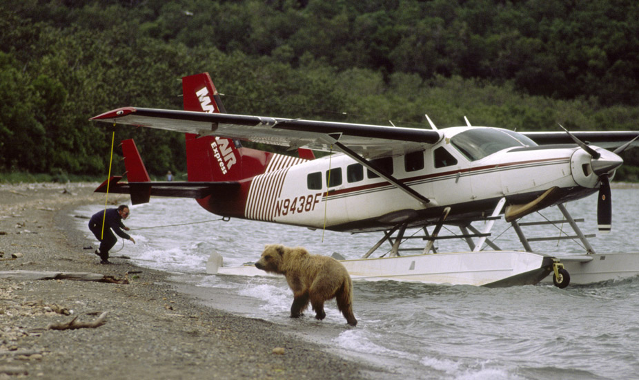 An image of  a  high wing floatplane being  turned around physically by the pilot so he could take off. In the foreground is a young brown bear which the pilot is watching carefull while he works at rotating the aircraft.
