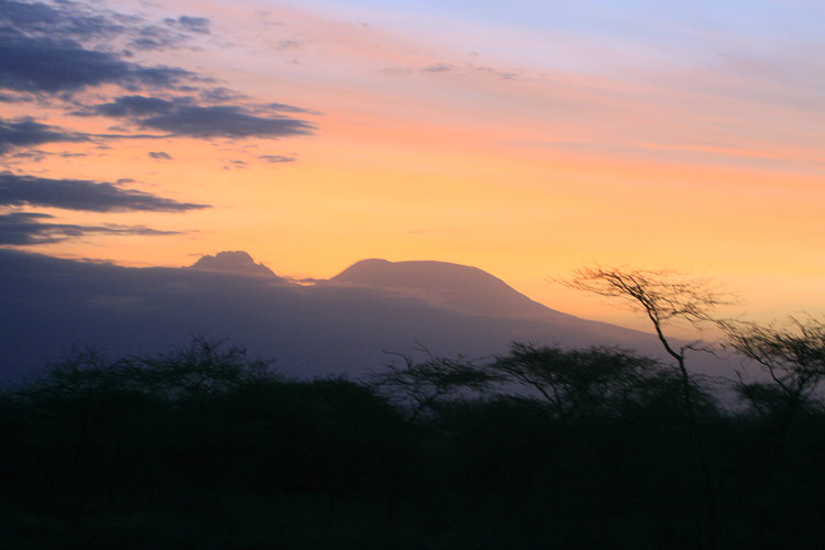 An image of Kilimanjaro in evening light looming over the trees in front of the Kitani bandas.