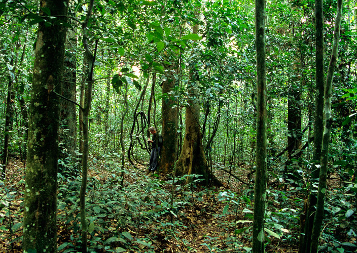 An image of Paul Augustinus on a path leading through some dense rainforest