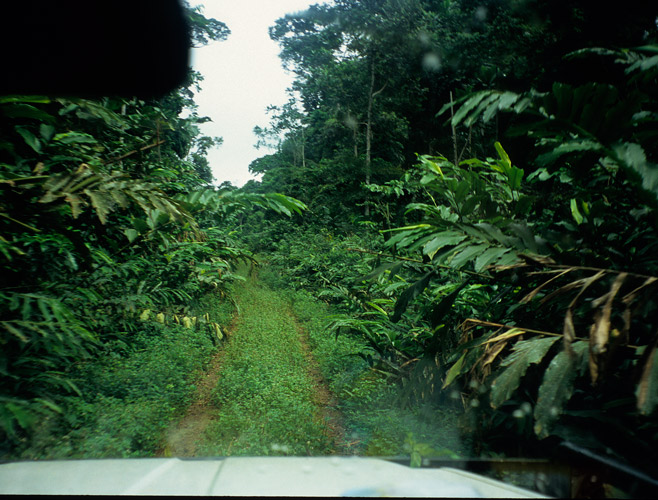 An image of a rainforest track looking forward from a vehicle's cab. Heavy vegetation presses in on both sides.