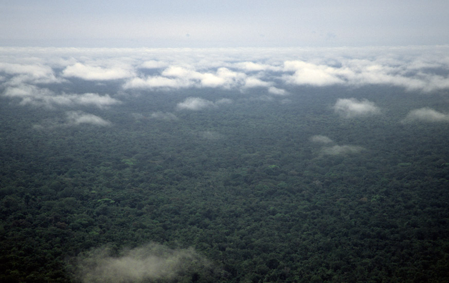 An aerial image of the rainforest showing nothing except a green unbroken carpet of huge trees stretching to the distat horizon in every direction
