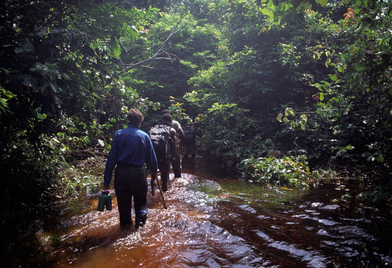 An image of Clarissa Augustinus following behind Benjele Pygmy guides through a very narrow and confined path through the rainforest. Streams were convenient paths!