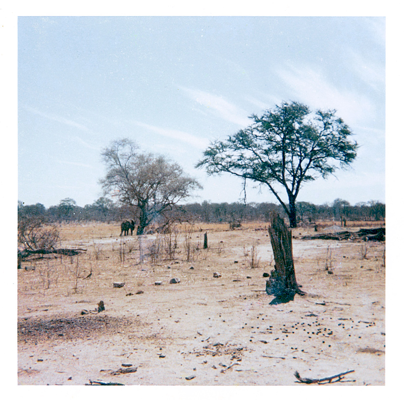 An image of a distant elephant walking away from a small waterhole in arid bush scenery